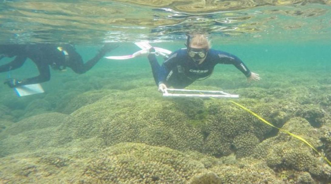 メキシコの海でダイビング調査に繰り出す高校生ボランティア